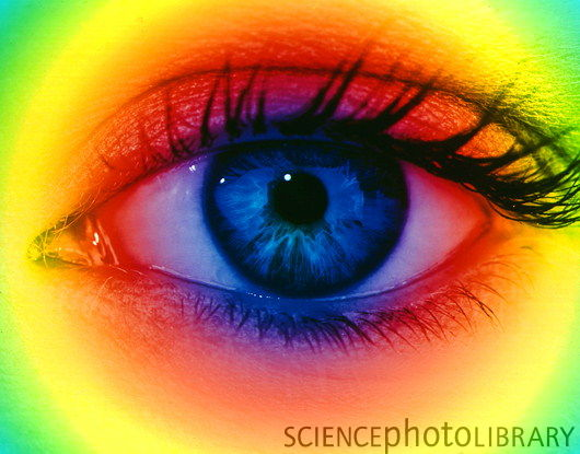 Ali S Eye Care Amp Contact Lens Clinic Services